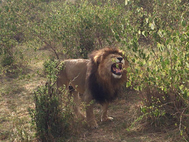 Freak Bitches:  Lion Panty Sniffers