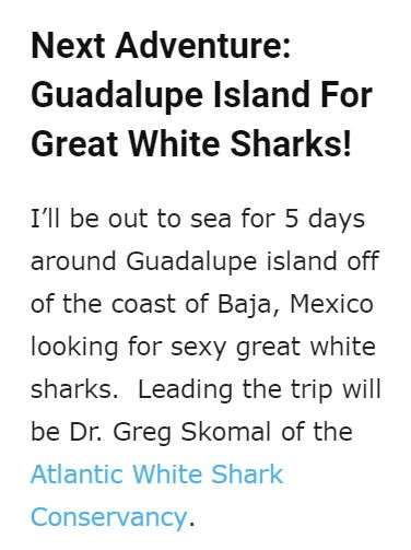 guadalupe-island-great-white-shark-greg-skomal