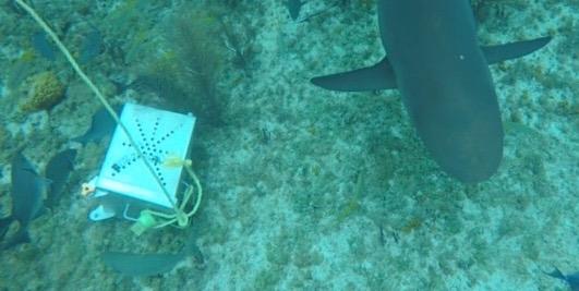 shark-bait-box