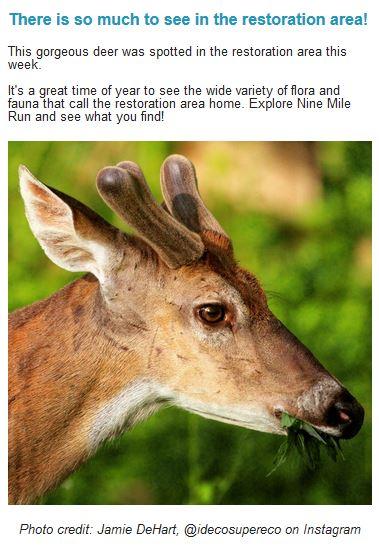 deer-nine-mile-run-newsletter