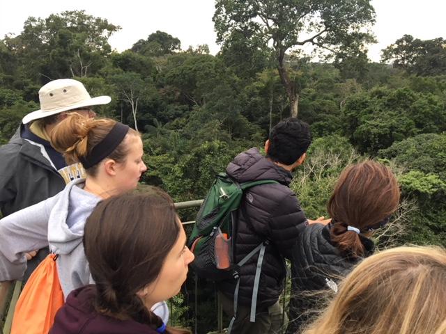 refugio-amazonas-observation-tower